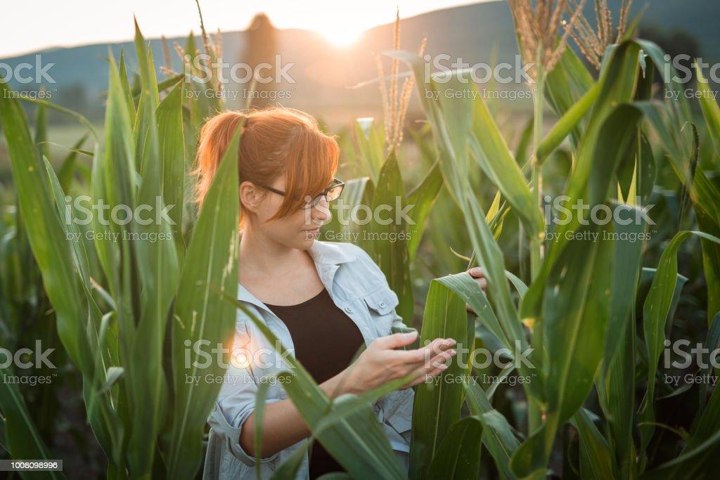Frau im Feld prüfen – Foto