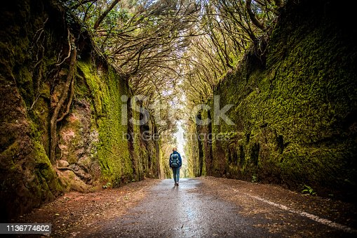 Woman exploring a beautiful green forest of Anaga, Tenerife National Park, Canary Island. Spain.