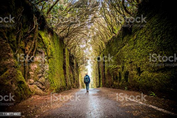 Photo of Woman exploring green laurel forest tunnel road