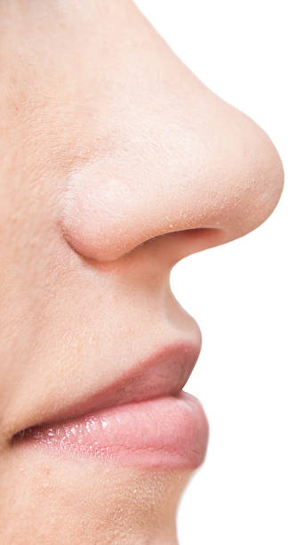 woman face woman face on white background human nose stock pictures, royalty-free photos & images
