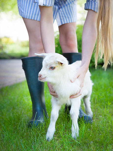 woman farmer and young goat - ziegenhof stock-fotos und bilder
