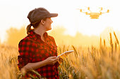 Woman farmer controls drone with a tablet. Smart farming and agriculture