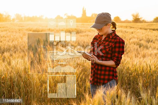 istock A woman farmer examines the field of cereals and sends data to the cloud from the tablet 1134664901