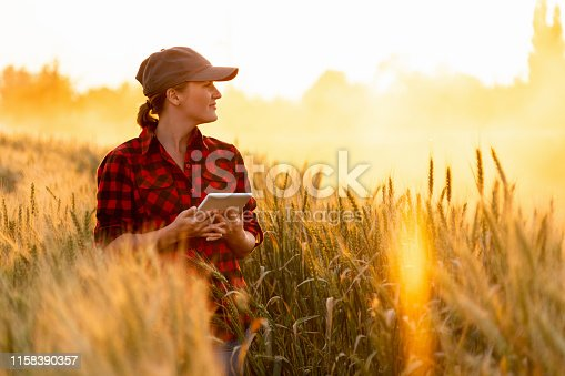 A woman farmer examines the field of cereals and sends data to the cloud from the tablet. Smart farming and digital agriculture.