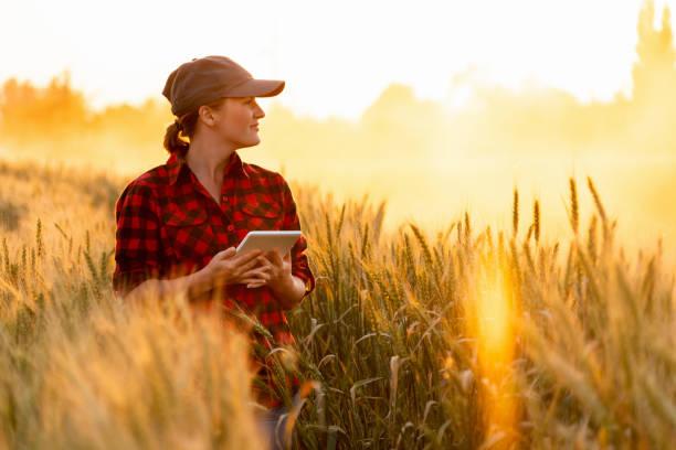 um fazendeiro da mulher examina o campo dos cereais e envia dados à nuvem do comprimido - cena rural - fotografias e filmes do acervo