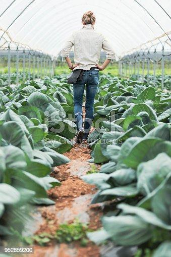 istock Woman farmer in greenhouse 952859200