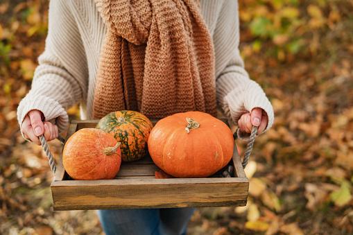 Woman farmer picking autumn crop of pumpkins on farm.