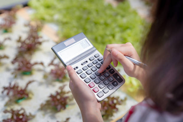 woman farmer use calculator checking stock and price hydroponics vegetables in market greenhouse, organic farmer working technology payment and shopping, farmers small business healthy food nutrition - gmail imagens e fotografias de stock