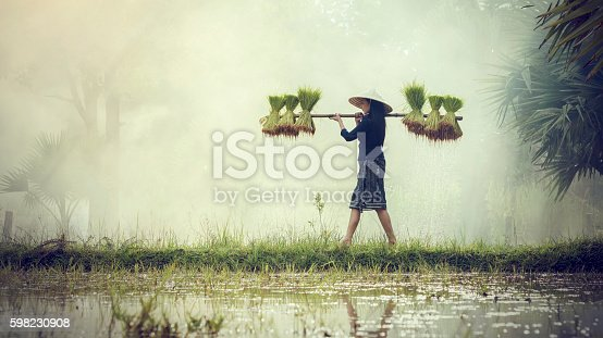 istock Woman Farmers grow rice in the rainy season. 598230908