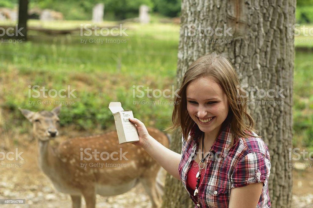 Woman feeding a deer in the zoo royalty-free stock photo