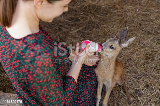 Young woman feeding little fawn with nursing bottle, stroking it