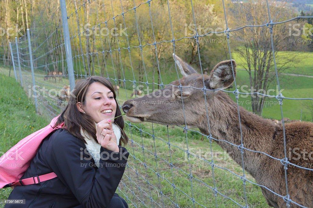 Woman feeding European 'Roe Deer', Capreolus capreolus stock photo
