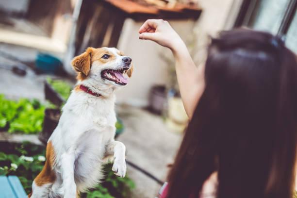Woman feeding her dog in backyard and have fun picture id942150048?b=1&k=6&m=942150048&s=612x612&w=0&h=wbl8wap0 wjzbpvzyjjcm7nyfgmi6sn6uvtcbakmezu=