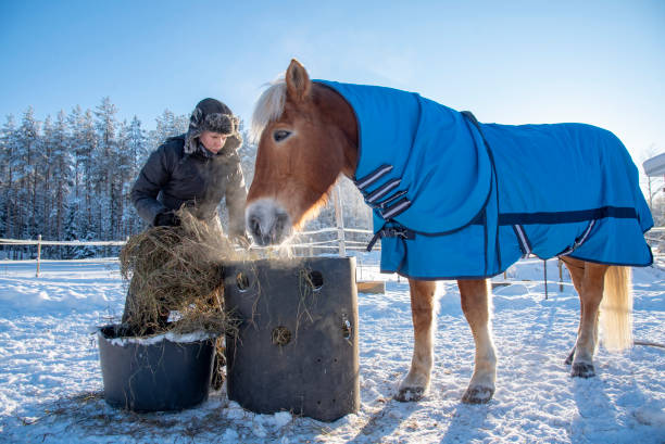 Woman feeding horse in winter picture id1129613218?b=1&k=6&m=1129613218&s=612x612&w=0&h=j wxbcwfdjku k1m8fjdboalt3bfgoo4pjkdgu3vfdg=