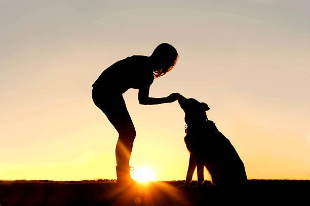 frau füttern haustier hund leckereien silhouette - spielabend snacks stock-fotos und bilder
