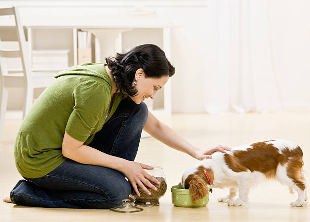 frau füttern hund - füttern stock-fotos und bilder