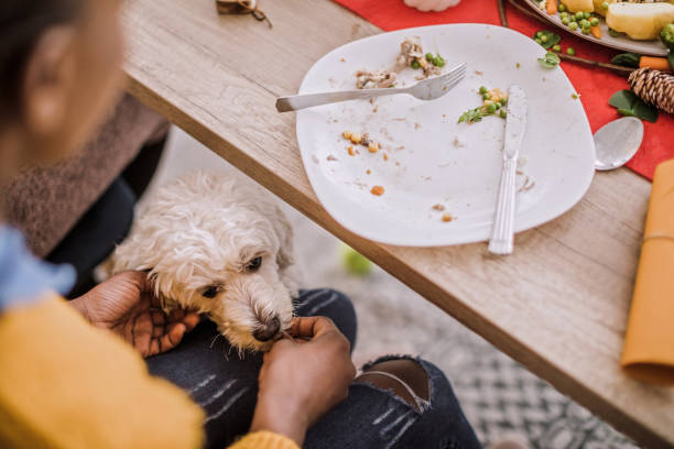 Woman Feeding Puppy With Leftovers Of Christmas Dinner Cute Puddle Waiting For African Woman To Give It Leftovers Under Table On Christmas Eve dog table scraps stock pictures, royalty-free photos & images
