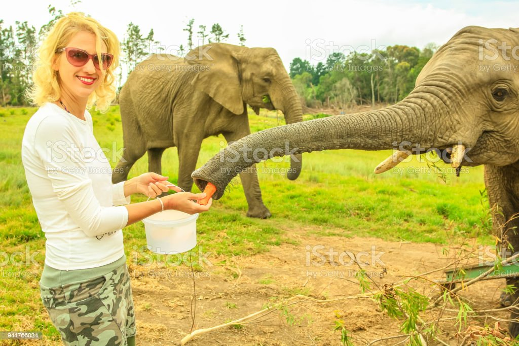 Woman feeds Elephant