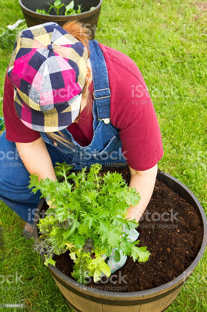 Woman Filling A Planter With Vegetable Plants royalty-free stock photo