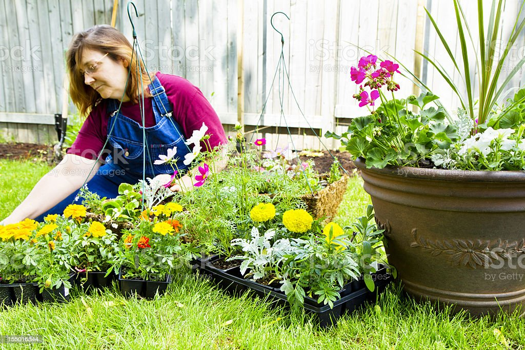 Woman Filling Planters With Flowers royalty-free stock photo