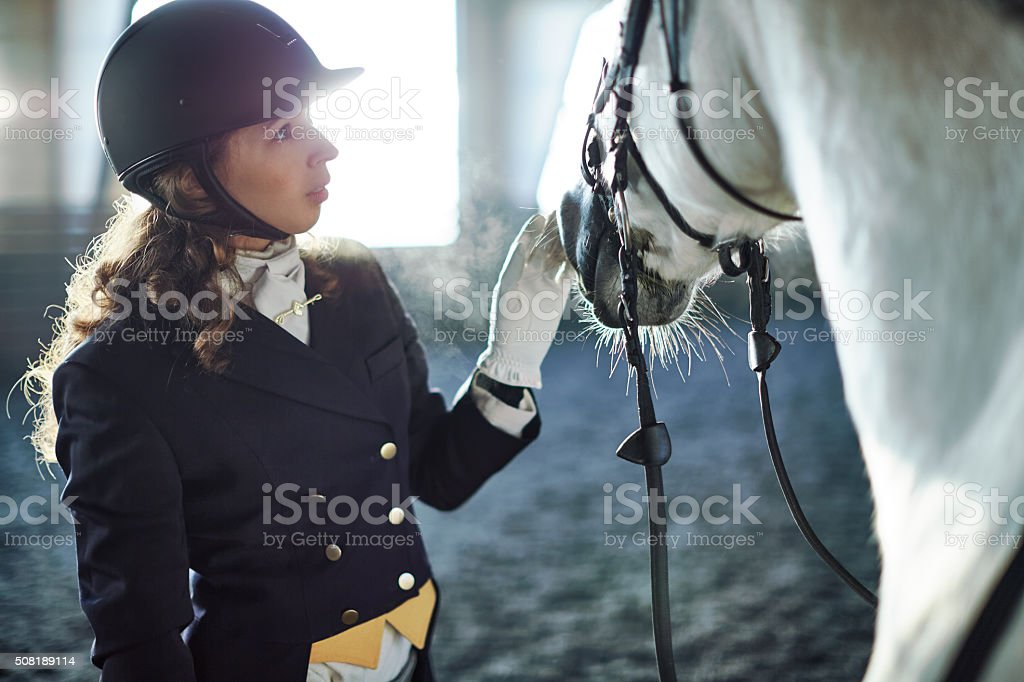 Woman fixing harness on a horse stock photo