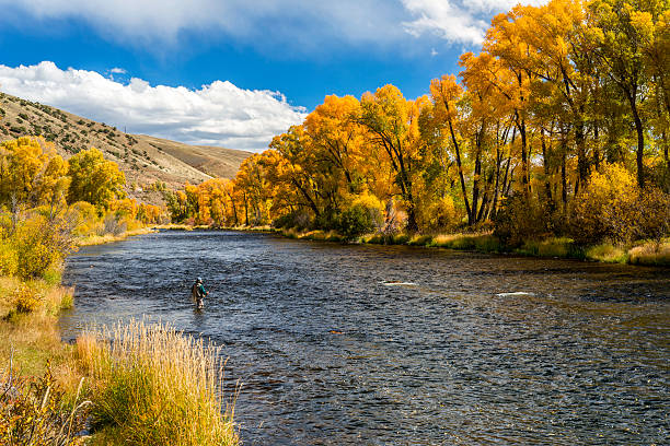 Woman Fly-Fishing in the Colorado River During Fall A lone woman fly-fishing in the Colorado River in the fall.  Image captured near Parshall, Colorado in the Rocky Mountains. colorado river stock pictures, royalty-free photos & images