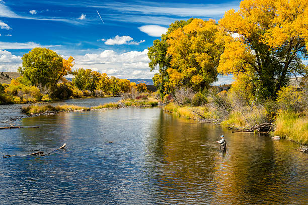 Woman Fly-Fishing in the Colorado River During Fall stock photo