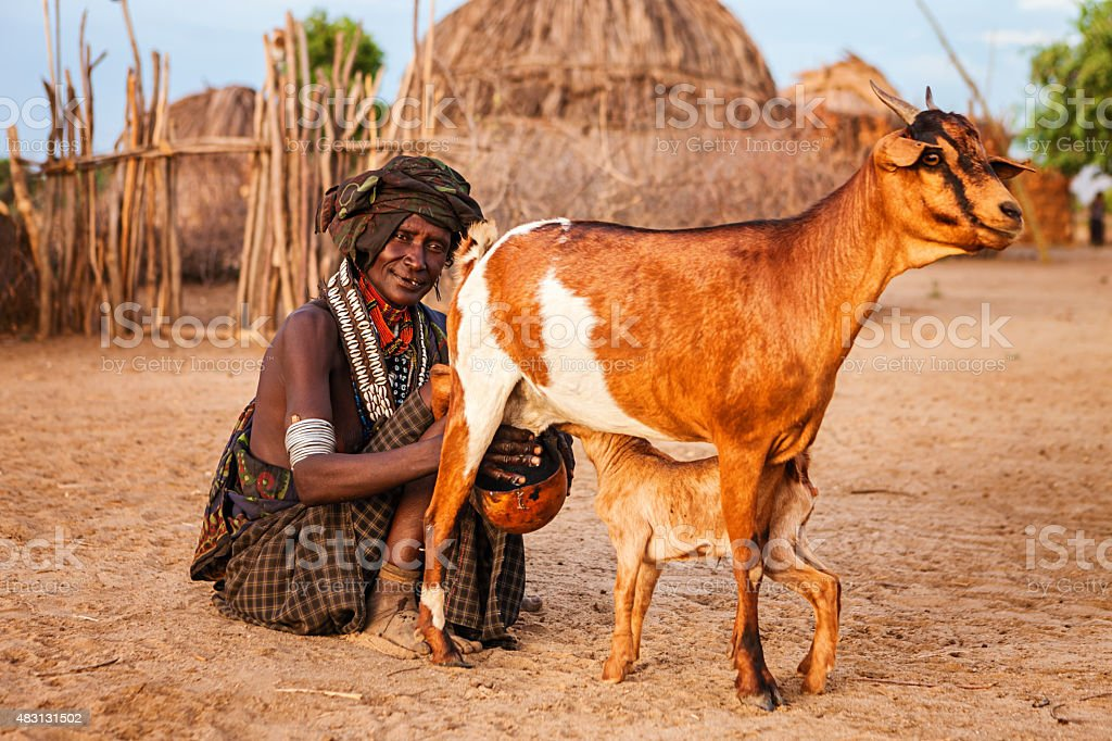 Woman from Erbore tribe milking goat, Ethiopia, Africa stock photo