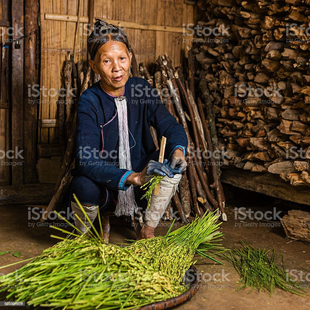 Woman from the Lantan hill tribe harvesting a rice stock photo