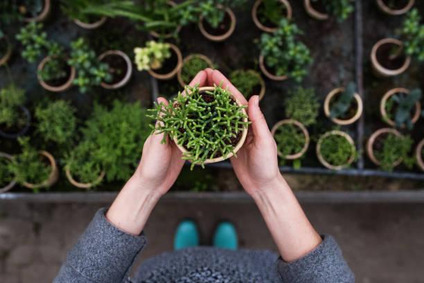 jardinero de mujer en un gran invernadero sosteniendo una maceta con planta. - jardinería fotografías e imágenes de stock
