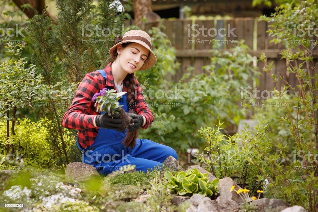 woman gardener planting flower in soil zbiór zdjęć royalty-free