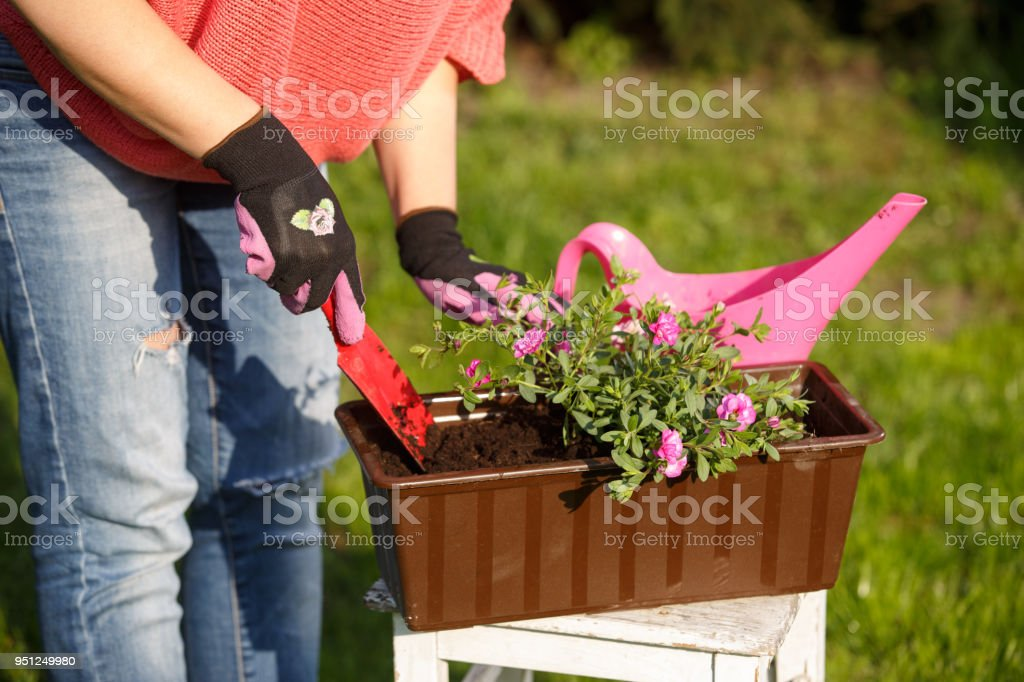 Woman Gardener Planting Flowers – zdjęcie