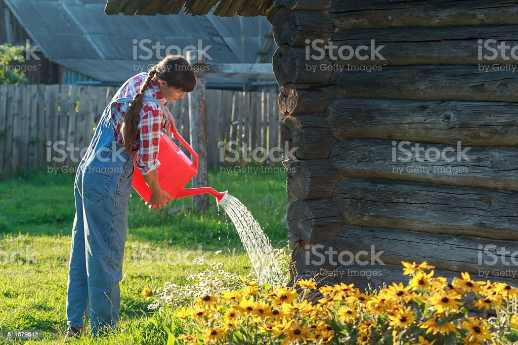 Woman gardener pouring water on flower garden bed stock photo
