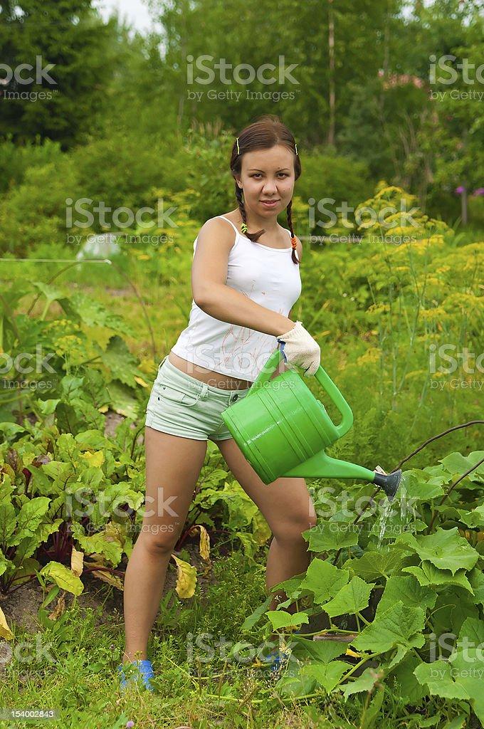 Woman gardener watering stock photo