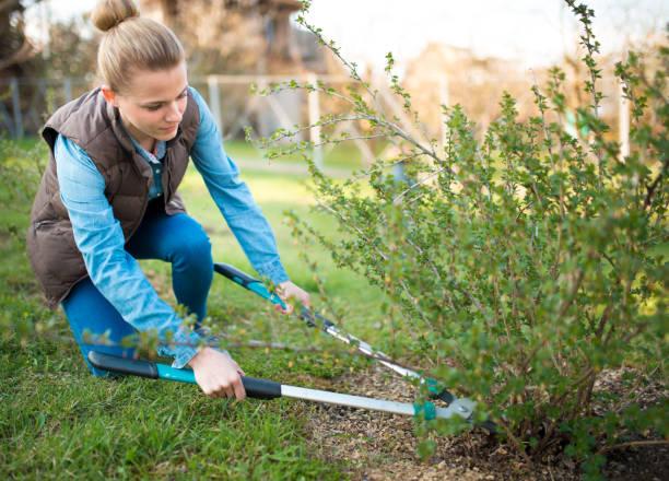 vrouw tuinman werken met hedge schuintrekken in de werf, professioneel plantsoenwerkster snoeien takken, service en business concept tuinieren foto