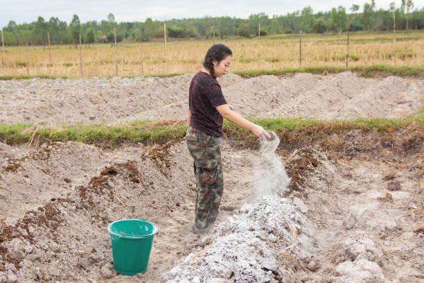 婦女園丁將石灰或氫氧化鈣放入土壤中和土壤的酸度。 - 鈣 個照片及圖片檔