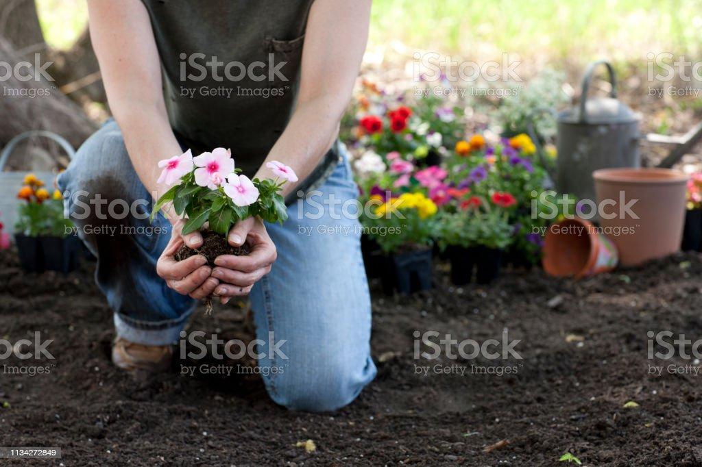 ビンカアルカロイド花を保持する女性園芸 - 1人のストックフォトや画像 ...