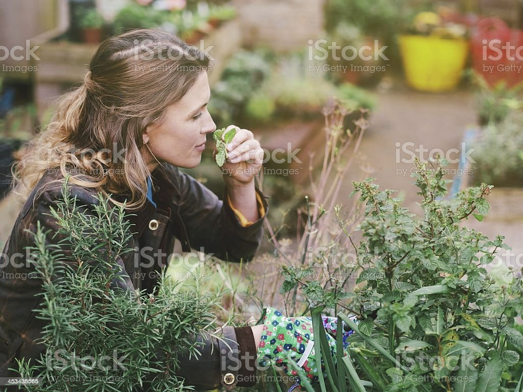 Woman gardening in a community garden stock photo
