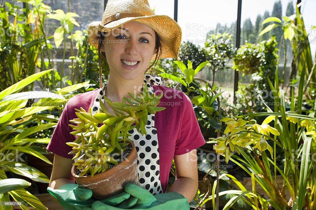 Donna giardinaggio in una serra foto stock royalty-free