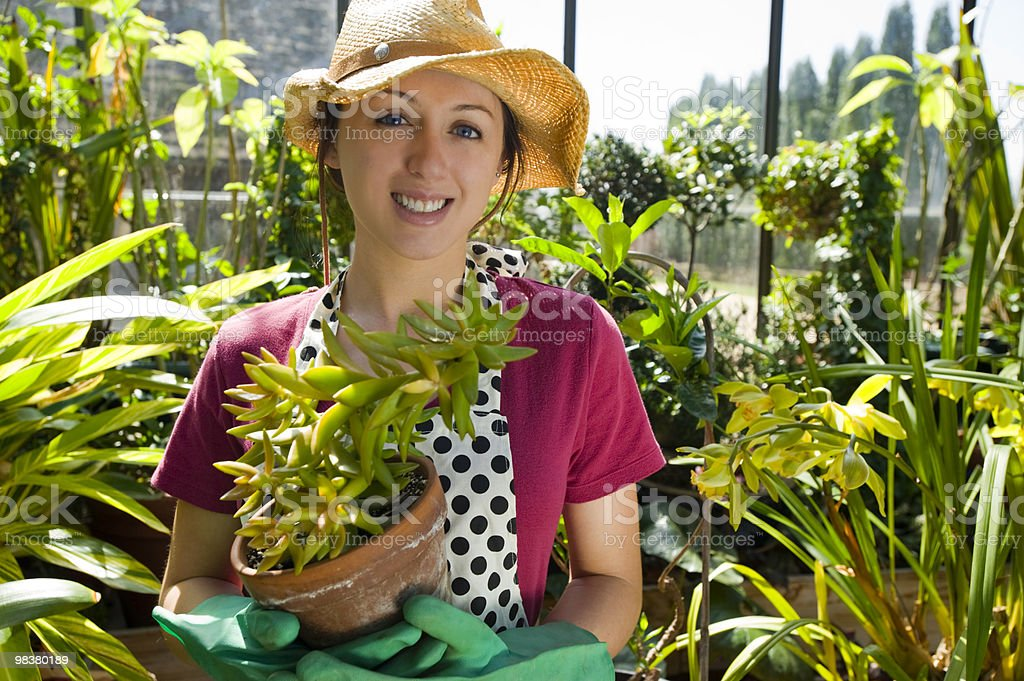 Woman gardening in a greenhouse stock photo