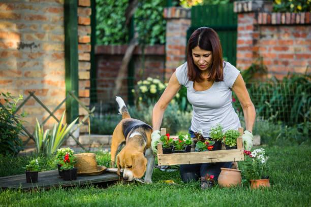 Femme jardinage dans son jardin - Photo