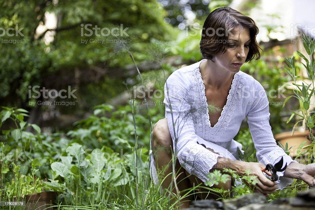 Woman gardening royalty-free stock photo