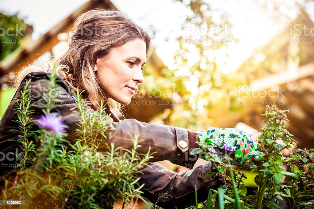 Woman gardening stock photo