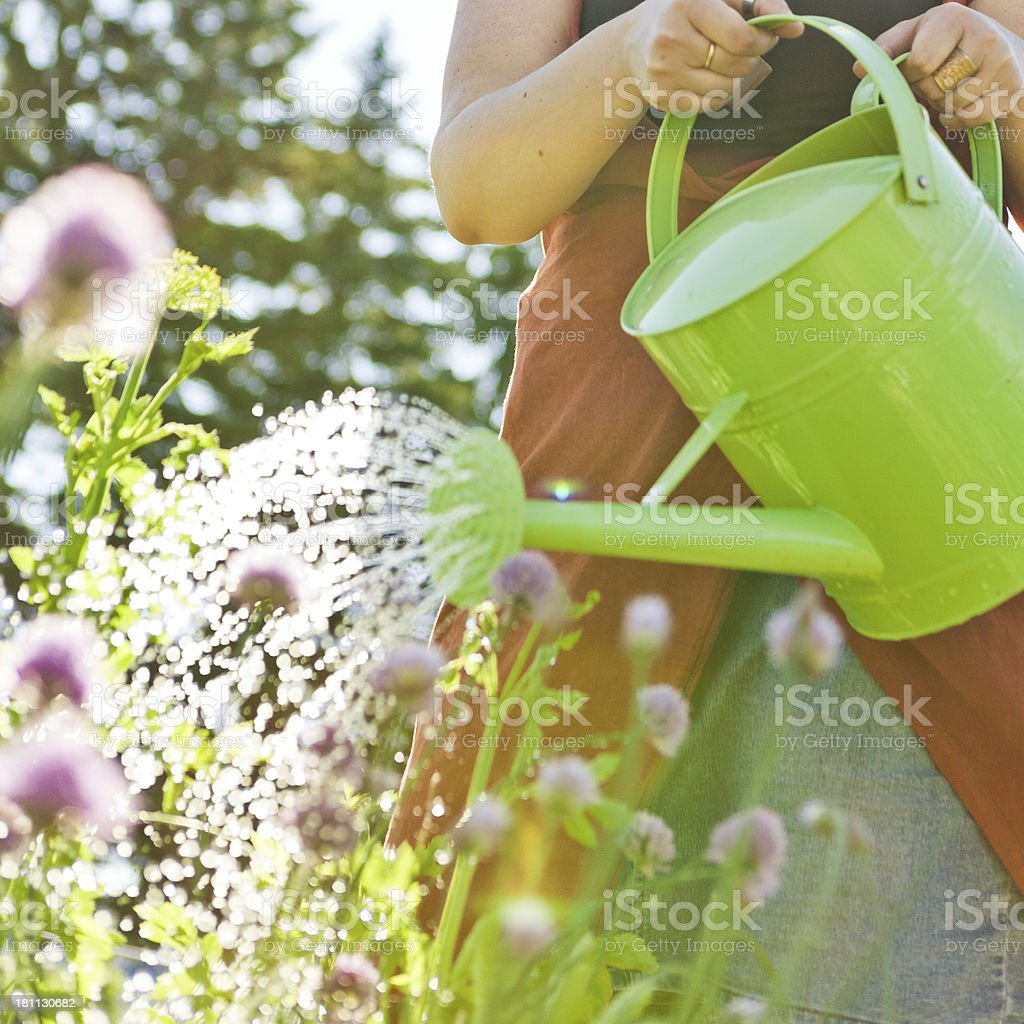 A woman gardening using a watering can on flowers stock photo