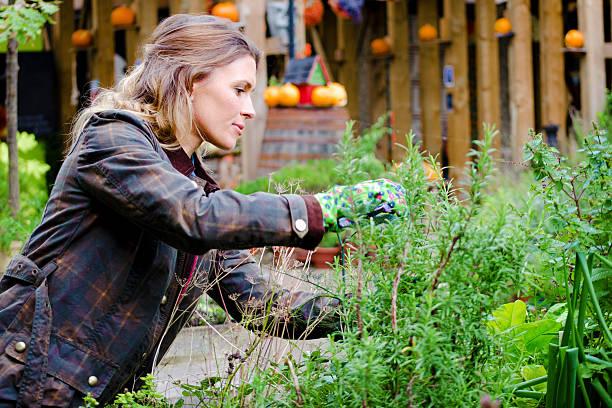 Woman Gardner Taking Care Of Plants, Prune. stock photo