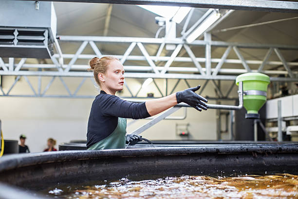 Woman giving food to fishes in tanks - foto de stock