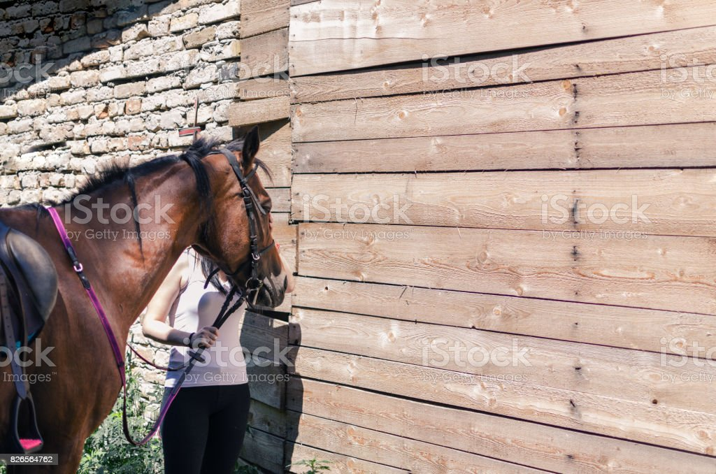 woman giving support to horse stock photo