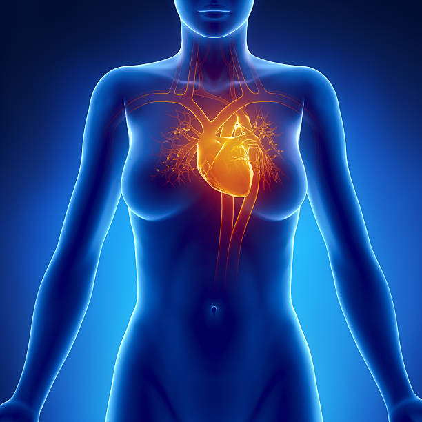 Woman glowing heart anatomy Woman glowing heart anatomy 3D render CGI janulla stock pictures, royalty-free photos & images