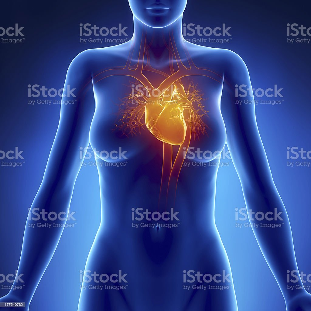 Woman glowing heart anatomy stock photo