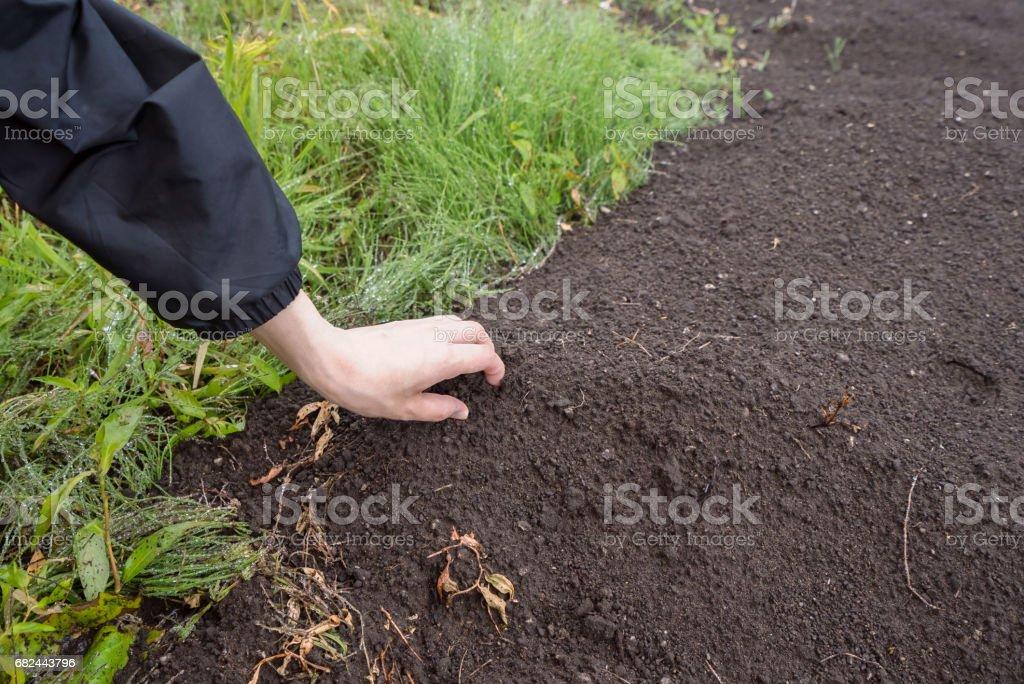 Woman grabbing soil royalty-free stock photo